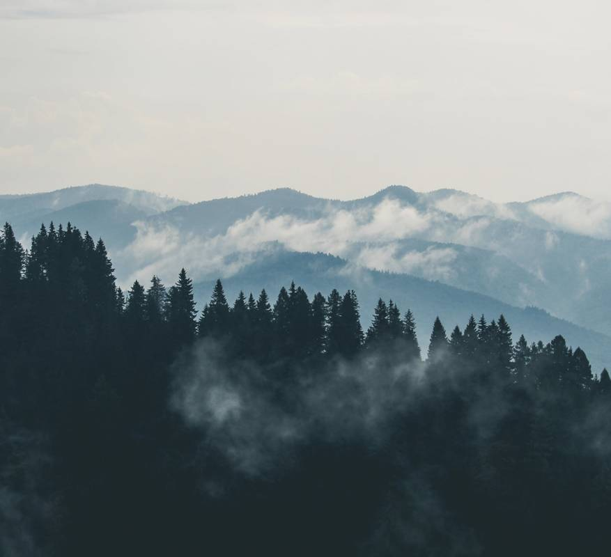 Buying and Selling Timberlands - Allegheny Veneer